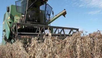 La oferta de Paraguay: una sequía recortó en 1,5 millones de toneladas la cosecha de soja