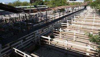 Paro del campo: no se comercializará hacienda desde el jueves en rechazo al cierre en la exportación de carne