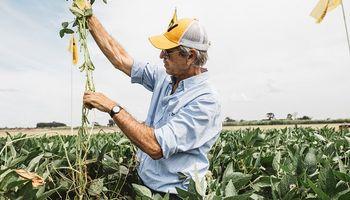 Nidera invita a conocer las novedades de soja, maíz, trigo y girasol por región