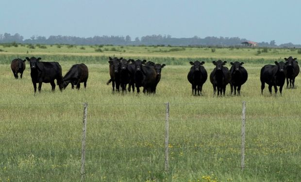 Campos de la Depresión del Salado ayudan a enfriar el planeta.