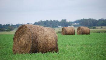 Soluciones a una de las principales limitantes que poseen los sistemas ganaderos de cría