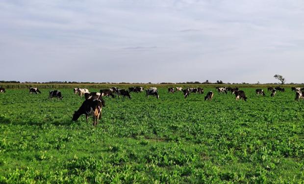 Respuesta de un agrónomo a Cabandié por la emisión de gases de la ganadería