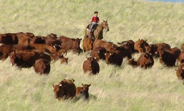 Un error habitual en los contratos de pastoreo o pastaje.