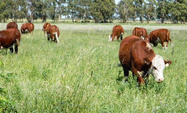 Tener una maquinaria adecuada para hacer la siembra favorecerá el trabajo, y por ende, la implantación de la pastura.