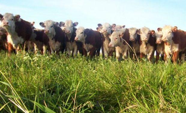 Pastos bien protegidos, mayor productividad