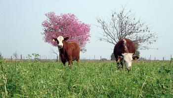 Fertilización de pasturas y modelos integrados de recomendación