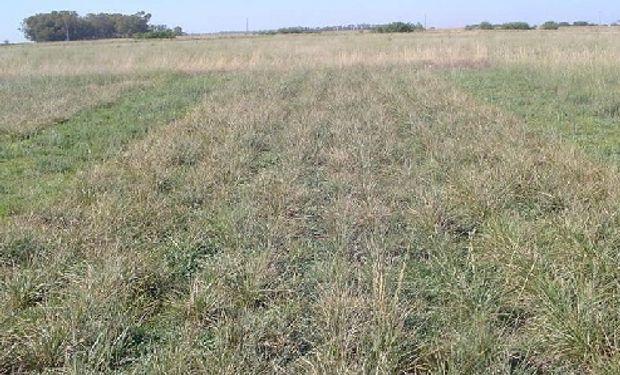 Es importante definir el lote en el que se implantarán las pasturas y conocer los tipos de suelos, identificarlos y sectorizarlos para tratarlos de manera independiente.