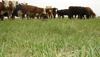 Pasturas tropicales duplican la producción en la Cuenca del Salado