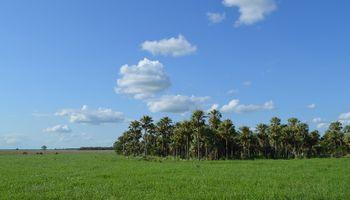 Los #Megatips para la siembra de pasturas megatérmicas