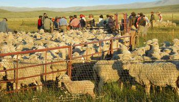 Patagonia: detallan la gravedad de la situación que atraviesan productores ovinos