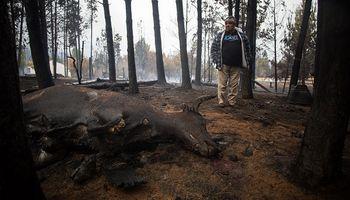 Incendios en la Patagonia: hallaron muerto junto a su caballo y el perro a un peón rural