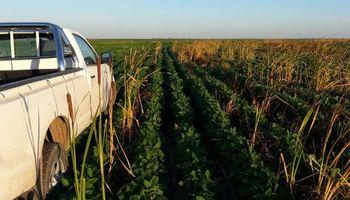 Crecieron un 85% los patentamientos de camionetas agropecuarias