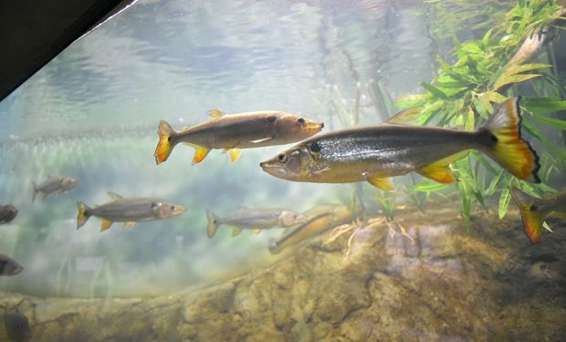 El centro exhibirá 7 mil peces de 80 especies dispuestos en grandes peceras.