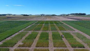Con pellets de compost lograron aumentar el rendimiento del trigo un 19 %