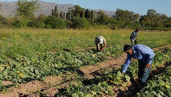 Licencia por vacaciones en el trabajo agrario: las 4 posibilidades que estipula la Ley