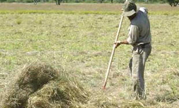 América Latina y el Caribe viven el mejor momento para la agricultura