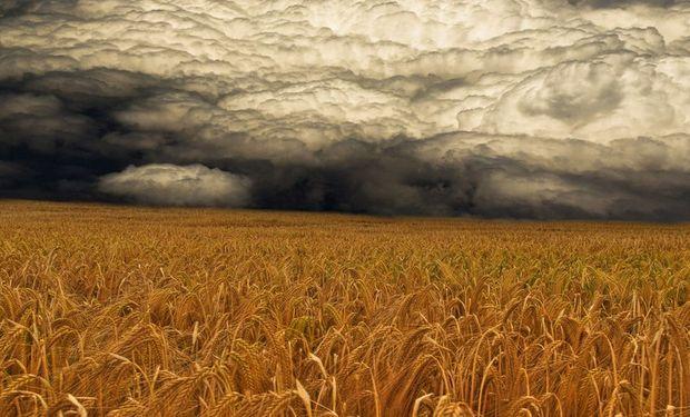 El nivel de siembra esperado por la BCR es el segundo más bajo de los últimos 100 años, sólo superado por el ciclo 2012/13. Entonces, la siembra había alcanzado las 3,1 millones de toneladas.