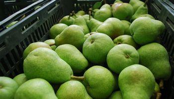 Senadores nacionales formalizaron su pedido de prórroga de la declaración de la ley de emergencia frutícola