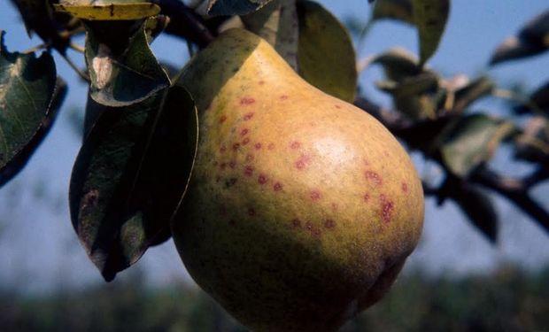 Expertos de Syngenta recomiendan el uso de insecticidas desde noviembre hasta finales de febrero.