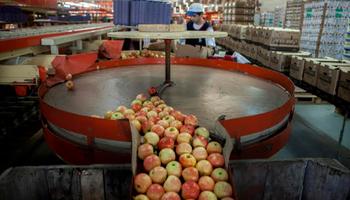 Brasil levantó la suspensión para las peras y manzanas de Argentina