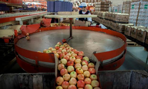 Se podrán retomar los envíos de peras y manzanas.