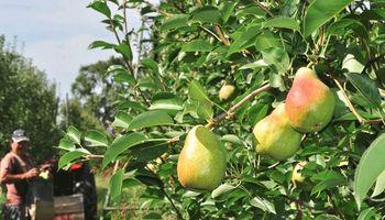 Prorrogan por un año la emergencia nacional para peras y manzanas