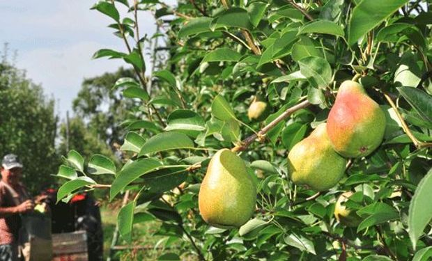 Emergencia en la cadena de producción de peras y manzanas.