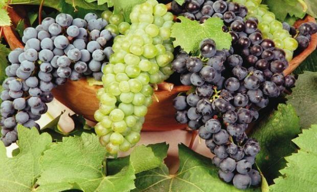 El sector con mayor riesgo de pérdida de empleo es el vitivinícola. Existen 156.000 puestos de trabajo en peligro en este rubro