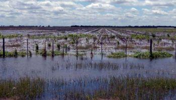 Pérdidas del campo ascenderían ya a 5,2 millones de toneladas