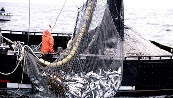 Cuántos dólares aportó el sector pesquero en ocho meses