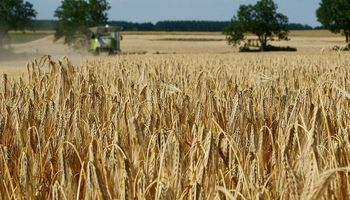 Buenas perspectivas para el trigo en Rusia