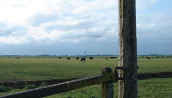 3 de cada 4 empresarios agropecuarios prevén una recuperación del país