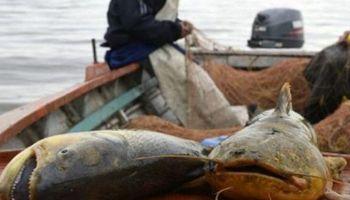 Buscan preservar especies de peces del Paraná y establecen cupos de exportación