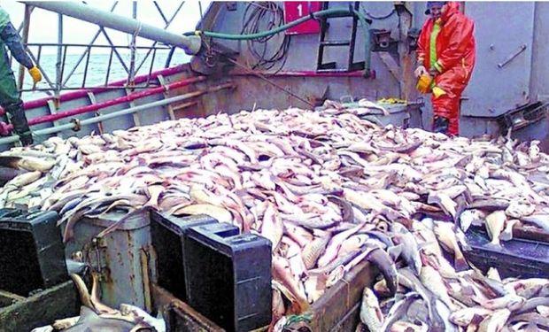 Negocio criminal y daño monetario: una colosal flota de barcos asiáticos depreda el mar argentino