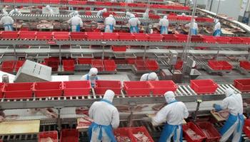Peste porcina africana: por las vacunas ilegales, se demora la recuperación del stock de cerdos en China