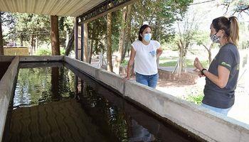 San Luis: siembran pejerreyes en cuerpos de agua para combatir al mosquito del dengue