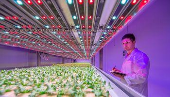 Signify: así es la iluminación LED que una ex Philips creó para cultivos