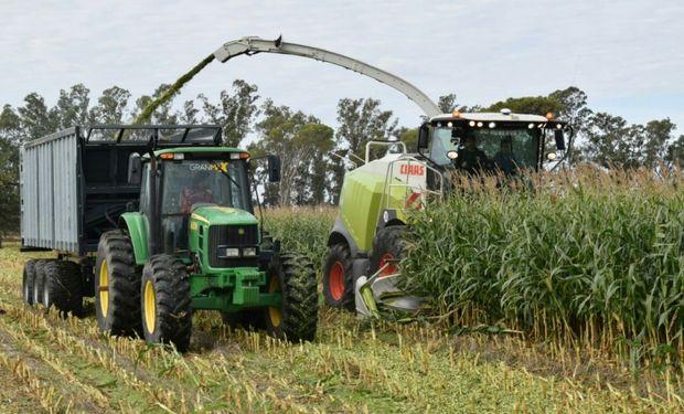 El maíz con destino a picado se presenta con muy buenos resultados en el centro y norte de Santa Fe