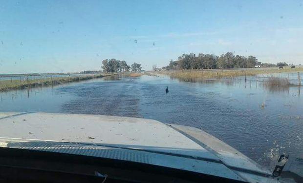 Trigo: cómo quedaron las reservas de humedad de todo el país luego de las precipitaciones