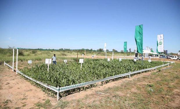 El predio de Expo Pioneros cuenta con 249 hectáreas.