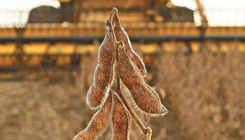 Mercado de granos consolidó pisos