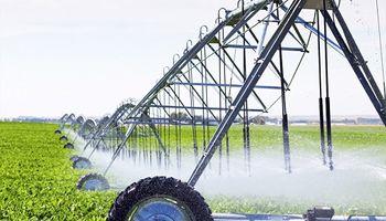 Con riego suplementario se puede hasta duplicar el rendimiento en trigo