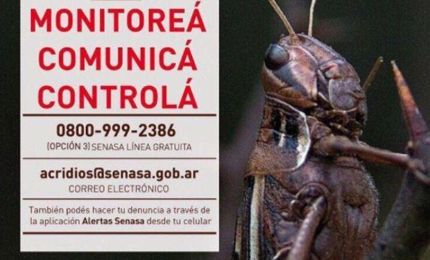 Intensifican los monitoreos y controles para detectar mangas de langostas en Córdoba.