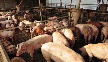 Avanza el Plan de Agroindustria para pequeños productores porcinos