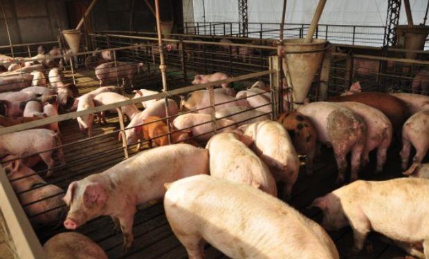 """""""Plan de apoyo a pequeños productores porcinos de la provincia de Córdoba""""."""