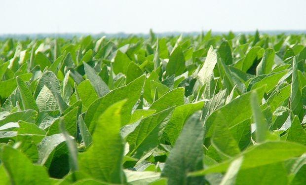 Reducen estimaciones de siembra de soja en 100 mil hectáreas