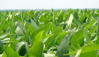 Santa Fe: condiciones ambientales óptimas para la soja de primera