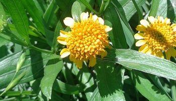 Plantas tóxicas: pautas para evitar pérdidas en el rodeo