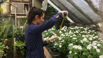 """Una popular planta """"de hogar"""" serviría para remediar los suelos contaminados con plomo"""
