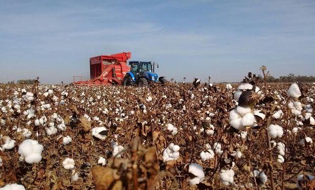Plot algodón en Agronea 2016.